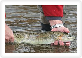 Limited pressure fly fishing