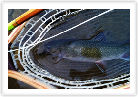 Brook trout, rainbows, and jumbo rainbows