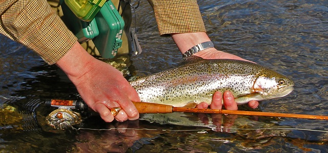 Virginia fly fishing madison county trout rose river for Fly fishing virginia